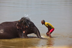 Man Splashing Water on Face of Asian Elephant Stock Photography