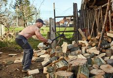 Man splitting wood. Man splitting beech wood logs for firewood Royalty Free Stock Photography