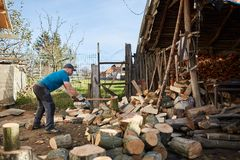 Man splitting wood. Man splitting beech wood logs for firewood Royalty Free Stock Images
