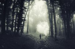 Man in spooky dark forest with fog on Halloween. Man on road in dark spooky forest with fog on Halloween. Path through haunted forest with fog on Halloween royalty free stock photography