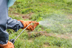 A man  is spraying herbicide. In fram that has many weed Royalty Free Stock Image