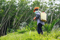 A man  is spraying herbicide. A man  with hat,glove and spayer tank  is spraying herbicide Royalty Free Stock Images