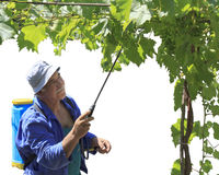 A man spraying his vine arbor Stock Photo
