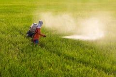 Man spraying in rice. Stock Photo