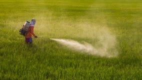 Man spraying in rice. Royalty Free Stock Images