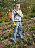 Man spraying strawberry plant. In garden Royalty Free Stock Photography