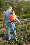 Man spraying strawberry plant Stock Photos