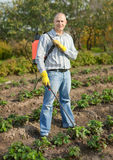 Man spraying strawberry plant. In garden Royalty Free Stock Image