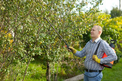 Man spraying tree branches Royalty Free Stock Photos