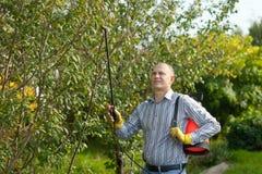 Man spraying tree plant Royalty Free Stock Image
