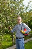 Man spraying tree plant. In orchard Royalty Free Stock Image