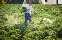 Man spraying vegetables. In the garden Royalty Free Stock Photos