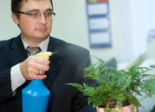 The man sprays flowers Royalty Free Stock Images