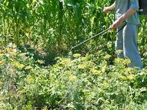 Man sprays pesticide on potato plantation Royalty Free Stock Photos
