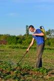 A man sprays poison bushes potatoes Royalty Free Stock Photos