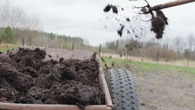 Man spreads organic fertilizer on his own farm. soil fertilizer. Close up stock video footage