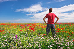 Man in spring meadow Stock Images