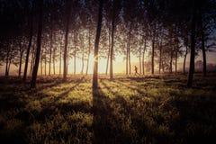 Man spring på en slinga i skogen Fotografering för Bildbyråer