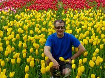 A man squatting down in front of a yellow and red  tulips gardrn Stock Photos