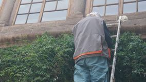 Man on the stairs cuts climbing plant leaves stock video