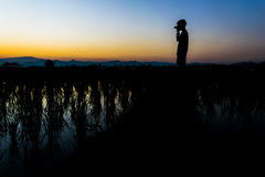 Man stand and take the camera on the rice field Royalty Free Stock Photography