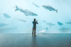 Man standing alone in big aquarium watching fishes. Taking photo by smartphone Travel lifestyle concept Royalty Free Stock Photography