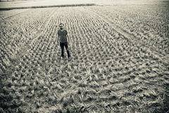 Man standing around an agricultural field unique photo. Man standing around an agricultural crops field isolated unique photograph stock image