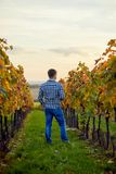 Man standing in autumn vineyard at sunset stock photography