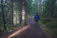 Man standing at the forest path Stock Photos
