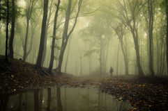 Man standing in a green forest with fog and trees. Reflecting in water after rain Stock Photography