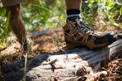 Man standing with his feet on wood log in the forest Stock Photos