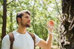 Man standing and looking at spider web in forest Royalty Free Stock Photos