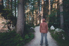 Man standing at the morning forest. Path Royalty Free Stock Image