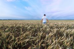 Man Standing On Wheat Field Royalty Free Stock Photos