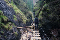 Man standing on the path through canyon Stock Image