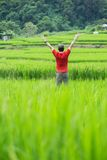 Man standing into rice field Royalty Free Stock Photos
