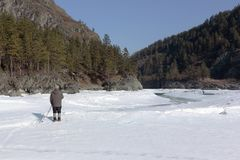Man standing with sticks on the bank of a melting river. In the spring. Katun River, Altai, Russia Stock Photo
