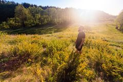 Man standing on summer green hill with trees at sunny day royalty free stock images