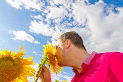 Man standing in a sun flower field - low perspective. Man standing in a sun flower field on a summer day Royalty Free Stock Photography