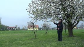 Man standing underneath blossoming tree stock footage