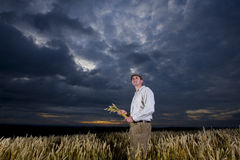 Man standing in wheat field Royalty Free Stock Photos