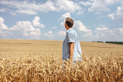 Man standing in wheat field Stock Image