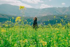 Man Standing on Yellow Bed of Flowers Royalty Free Stock Images