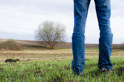 Man stands on burnt field with some remains of green grass and lonely tree on it. Stock Image