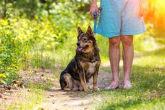 A man stands with a dog in the forest. A man stands barefoot with a dog in the forest in summer stock images