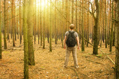 Man stands in the forest Royalty Free Stock Images