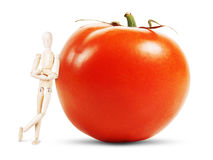 Man stands by a huge ripe tomato Royalty Free Stock Photos
