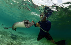 Man with a stingray underwater in ocean Royalty Free Stock Images