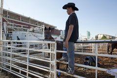 A man stood on a fence Calgary Stampede Royalty Free Stock Photo