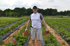 Man stood in strawberry fields Royalty Free Stock Photo